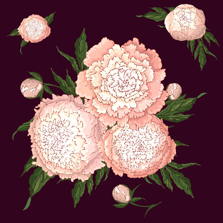 Vector peonies. Set of isolated light pink flowers. Bouquets of flowers on burgundy background. Template for floral decoration, fabric design, packaging or clothing