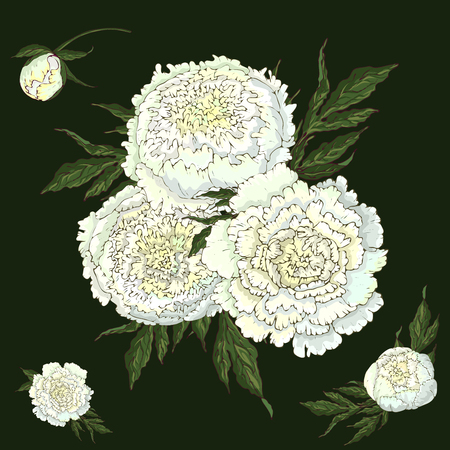 Vector peonies. Set of isolated white flowers. Bouquets of flowers on a dark green background. Template for floral decoration, fabric design, packaging or clothing.
