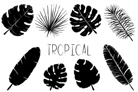Set of black and white palm leaves. Isolated silhouettes of tropical plants  on white background.
