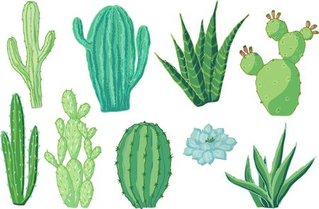 Vector set of cacti. Cartoon colored isolated objects on a white background. Multicolored hand drawn illustration. Illustration