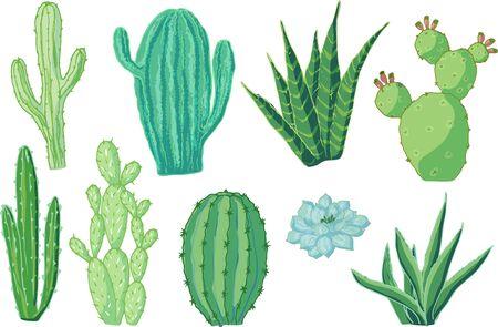 Vektor-Set von Kakteen. Cartoon farbige isolierte Objekte auf weißem Hintergrund. Mehrfarbige handgezeichnete Abbildung.