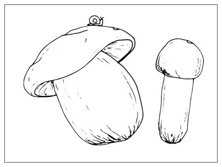 Vector illustration with porcini mushrooms. Isolated object on a white background. Linear hand drawn illustration. Outline style