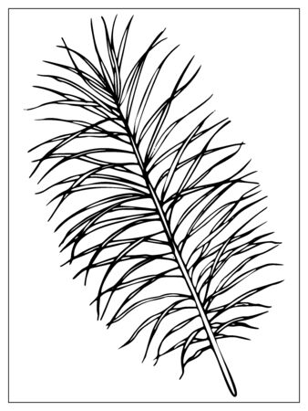 Vector palm leaf. Isolated black and white silhouettes of tropical plants on white background.
