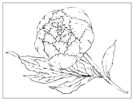 Vector peony. Isolated silhouette of a flower on a white background. Template for floral design, fabric design, packaging or clothing. Vector stock illustration. Isolated on a white Ilustracja