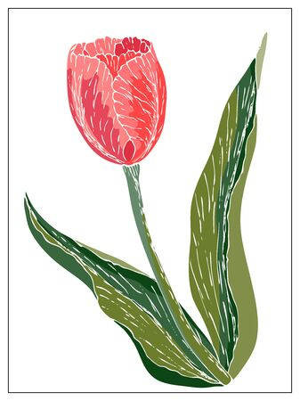 Vector floral illustration with tulip flower. Isolated elements on a white background. Delicate bulbous plant for your floral design. Vector stock illustration
