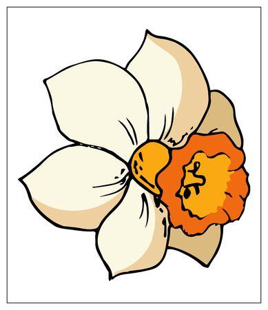 Kwiatowy ilustracja wektorowa z kwiatem żonkila. Pojedyncze elementy na białym tle. Delikatna bulwiasta roślina do twojego kwiatowego wzoru. Ilustracja wektorowa Ilustracje wektorowe
