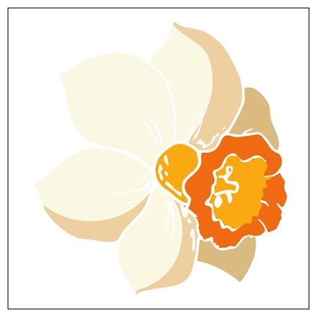 Vector floral illustration with daffodil flower. Isolated elements on a white background. Delicate bulbous plant for your floral design. Vector stock illustration Ilustração