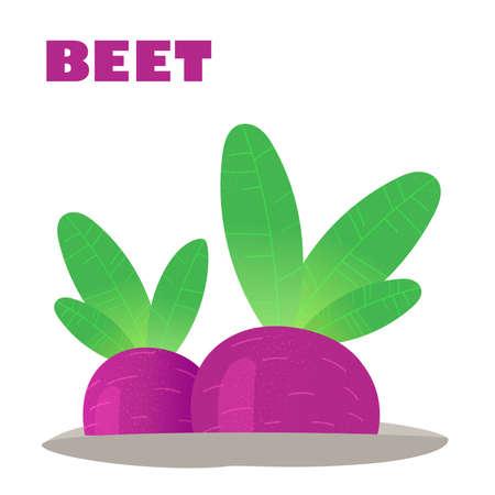 Juicy Beet grows in the garden. Vitamin-rich vegetables. Vector stock illustration
