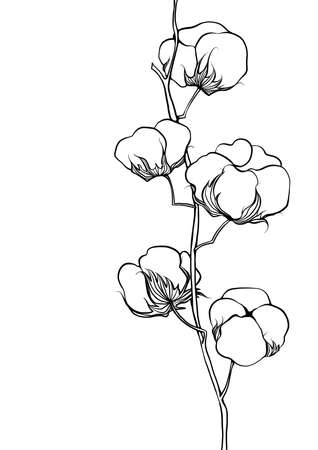 black and white line illustration of cotton flowers on a white background Stock Photo