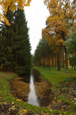 Autumn in the forest. Walk in the Park. St. Petersburg, Pushkin, Tsarskoye Selo. Catherine park.