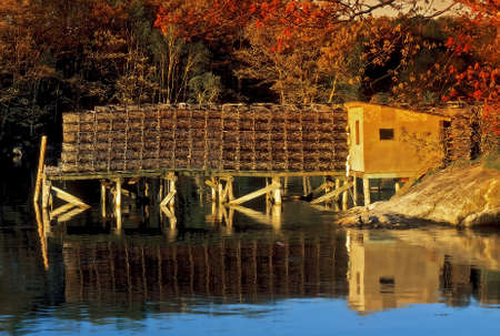 lobster boat: Abstract photo illustration of a sea shanty and boat dock piled high with lobster traps with colorful Autumn foliage on the trees in the background and blue ocean bay water  Manipulated photo
