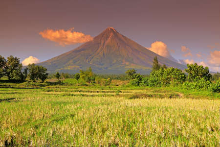 Mt  Mayon volcano Albay, Bicol region of Luzon, Philippine Islands from Cagsawa viewed across a rice paddy  It is a stratovolcano and is considered the world photo