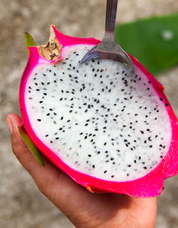 Hylocereus undatus  is the Pitaya blanca or White-fleshed Pitaya  It has red-skinned fruit with white flesh  This is the most commonly seen  dragon fruit   Sweet and refreshing  photo
