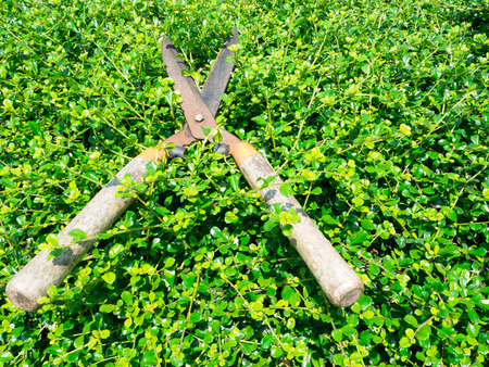 Grass Shears Stock Photo