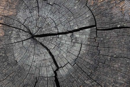 counted: Tree rings are counted to determine the age of a tree  Stock Photo