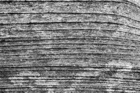 knotted: old planks background texture Stock Photo