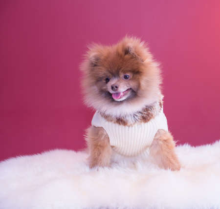 situp: situp smiling pup