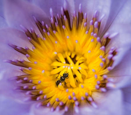 Lotus Insect photo
