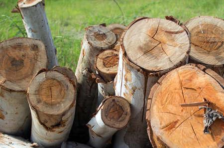 truncated: Wood eucalyptus truncated aside for transport. In the field eucalyptus. Stock Photo