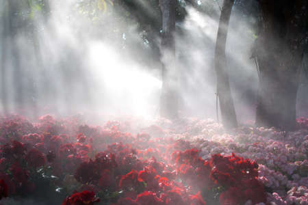 find similar images: Preview Save to a lightbox  Find Similar Images  Share Stock Photo: Flowers garden surrounded by a fog. The garden in winter, which looked at the emotional mind by imagining like heaven.