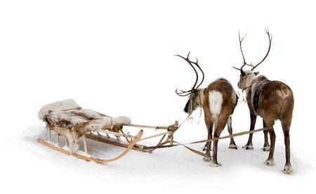 Twee rendieren staan om gordels in de winter.