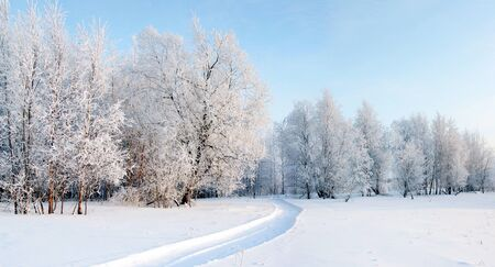 winter forest: A Panorama of frosty day in the winter forest. Stock Photo