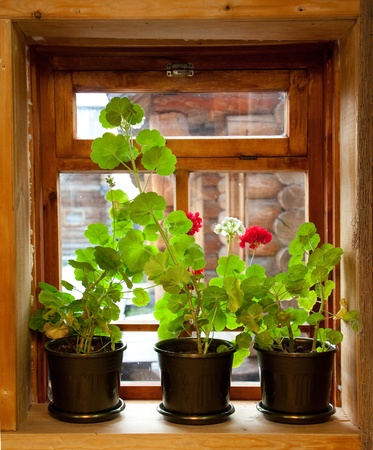 Geranium flowers on the window of the wood house. Stock Photo - 11569624