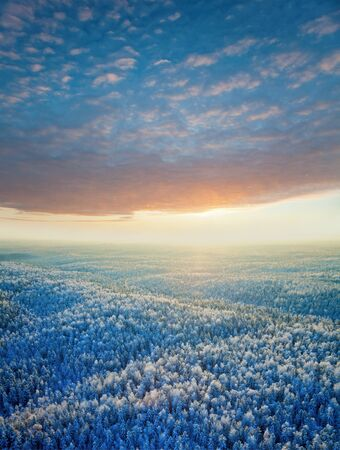 Aerial view of winter forest during sunset  photo