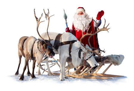 sledge: Pap� Noel est� cerca de sus renos en el arn�s en el fondo blanco