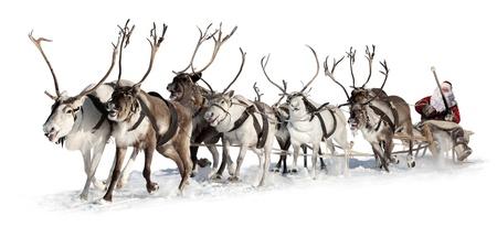 reindeer christmas: Pap� Noel viaja en un trineo de renos. �l se apresura a dar los regalos antes de Navidad. Este es el equipo r�pido de ocho ciervos. Foto de archivo
