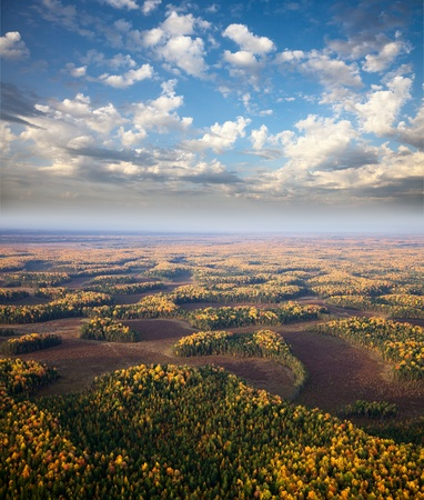 Aerial view the moorland with small groves in autumn  Typical habitats of cranberry  photo