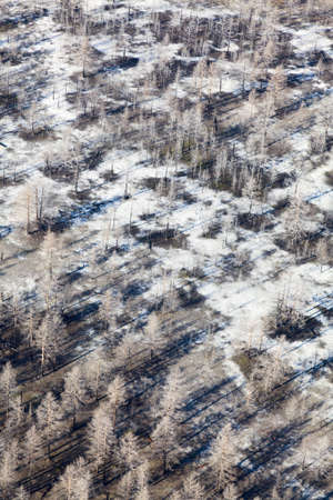 wildfire: burnt forest after a wildfire, aerial view