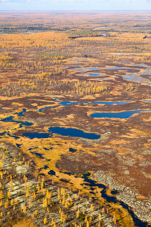 overhand: Aerial view of the marsh in forest-tundra in autumn.