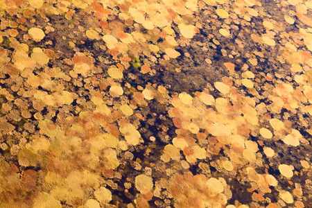 overhand: Aerial view of the marsh in tundra in autumn.