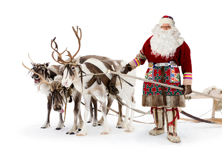 Santa Claus are near his reindeers in harness on the white background. photo