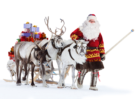 sleigh: Santa Claus are near his reindeers in harness, isolated on the white background. Stock Photo