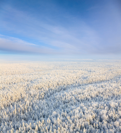 overhand: Aerial view of winter woodlands during a flight at frosty day.