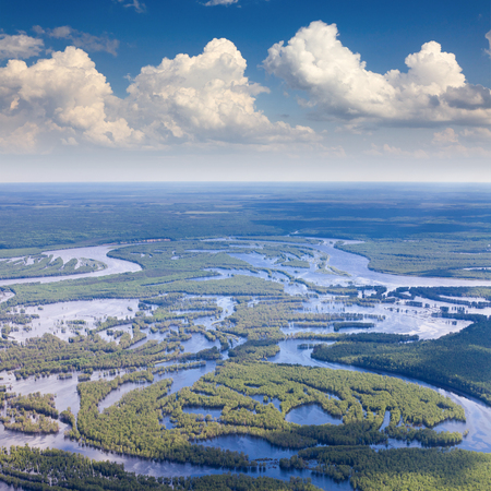 overflow: Aerial view flooded forest plains in summer.