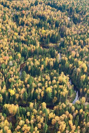 overhand: Aerial view of the forest river during the autumn. Stock Photo