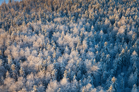 overhand: Aerial view of forest plain in time of sunny winter day.