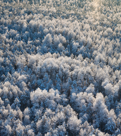 overhand: Aerial view of forest river in cold winter day during a flight.