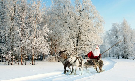 Santa Claus riding in sleigh and driving his harness of reindeer in the fairy winter forest.