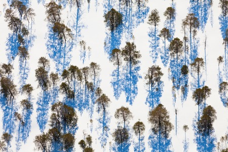 overhand: Aerial view of the sparse growth of trees in winter evening.