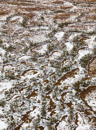 overhand: Aerial view of a swamps in the autumn. New Snow lies on the bog tussocks after first snowfall.