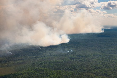 wildfire: Aerial view of wildfire in forest in cloudy summer day.