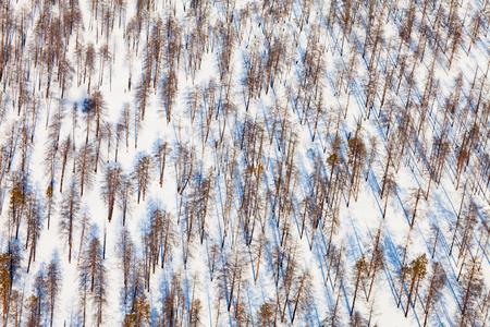 pine woodlands, top view