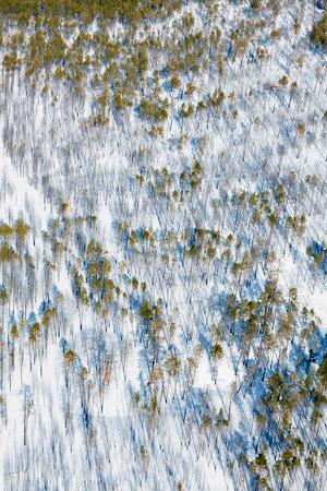 pine woodlands, top view Reklamní fotografie - 101523628