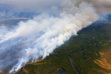 Forest in fire, top view from plane