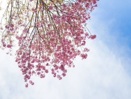 Blooming flower, nature regeneration. Flowering in the spring. The pink bud.
