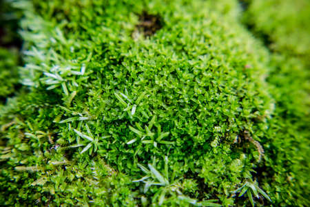 Green Mossy photo